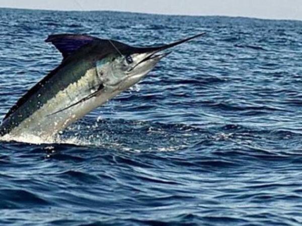 Sea of Cortez Fishing Charters in Loreto Baja Mexico