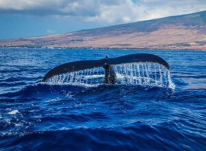 Loreto Blue Whale Watching Tours